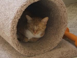 Banshee In Cat Condo